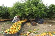 لماذا يباع البرتقال في أكياس شبكية حمراء اللون دون غيرها؟ السبب قد يدفعك للتدقيق أكثر في مشترياتك