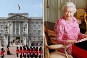 الفئران تغزو المطبخ الملكي في قصر باكنغهام