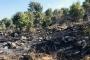 درجات الحرارة المرتفعة تتسبب بحريق في أحراج الكواشرة - عكار
