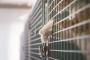 سلطات كوستاريكا تمسك بقط يهرّب هواتف محمولة للسجناء!
