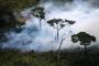 احتراق الأمازون : بولسونارو يخنق العالم…