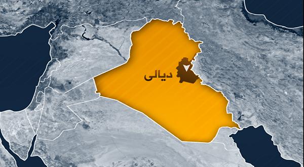 في أول حادثة من نوعها ... «داعش» يفخخ بقرتين ويفجرهما في العراق