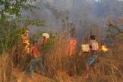 «رئة العالم» ما تزال تحترق.. مزارعون يتحدون الحظر