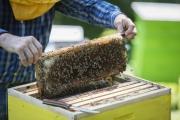 العسل الملكي تصنعه النحلات لتغذية الملكة الأم.. وهكذا يفيد الرجال