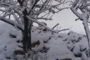 الطقس القطبي مستمر.. استعدوا لمنخفض ثانٍ شديد البرودة!