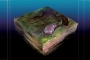 اكتشاف مخلوق يشبه حبة الأرز عمره 555 مليون عام