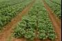 الزراعة التعاقدية... مستقبل القطاع بلا منازع