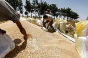 دمشق مطمئنة إلى سلامة الرغيف: «قسد» نحو السماح ببيع القمح؟