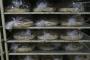 الأفران تعاود تسليم الخبز للموزعين: الربطة بـ2500