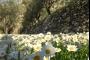 طقس ربيعي دافىء والحرارة فوق معدلاتها الموسمية