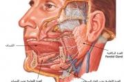 ربما تصاب بشلل الوجه بسبب نوافذ السيارة المفتوحة.. إليك الأعراض