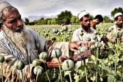 'وكالة الاستخبارات المركزية تمول بعض عملياتها من تهريب المخدرات الأفغانية'