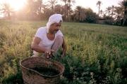مصر 'تفرم' 51 مليون مزارع بعد رفع أسعار الأسمدة