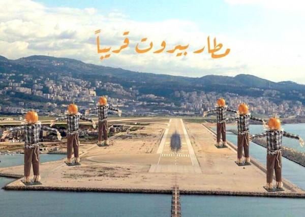 كيف تطرد النوارس في لبنان.. 'كش' المسؤول أولا